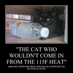 """""""THE CAT WHO WOULDN'T COME IN FROM THE 115F HEAT"""""""