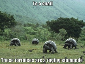 To a snail  These tortoises are a raging stampede