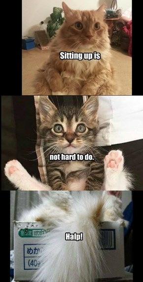 For most kitties!