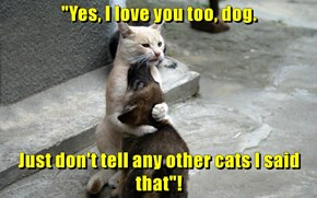 """""""Yes, I love you too, dog.  Just don't tell any other cats I said that""""!"""