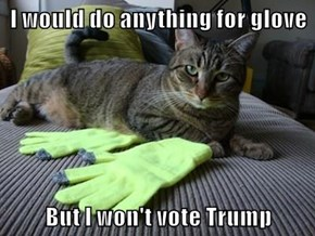 I would do anything for glove  But I won't vote Trump