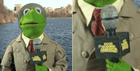 Good Morning America Calling Kermit the Frog #Tealizard Just Proves That It's Not Easy Being Green