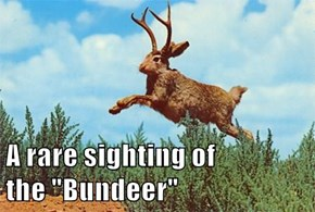 "A rare sighting of                              the ""Bundeer"""