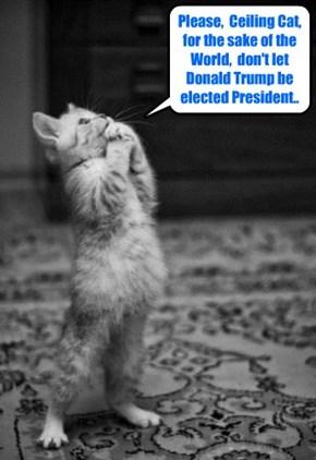 All kitties around the globe earnestly pray the same prayer..