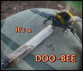 What's a joint like you doing in a bug like this?