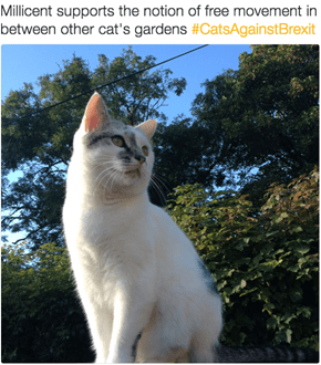 The #CatsAgainstBrexit Hashtag Is Taking Over Twitter As the EU Referendum Approaches