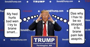 Trump-Dain Bread!