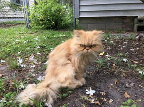 House Inspector Finds a Grumpy Floof in Desperate Need of a Home