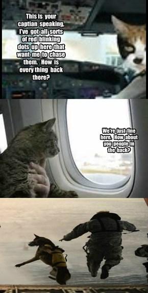 Feline Airlines