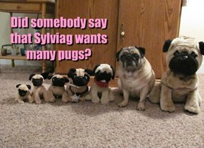 Did somebody say that Sylviag wants many pugs?