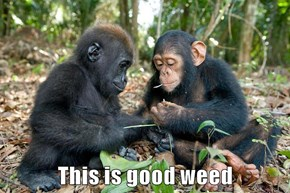 This is good weed