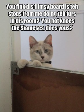 You fink dis flimsy board is teh stops from me doing teh furs in dis room?  You not knoes the Siameses, does yous?