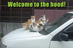 Welcome to the hood!