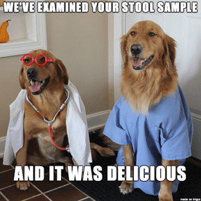 Dr Dogs