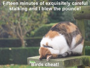 Fifteen minutes of exquisitely careful stalking and I blew the pounce!  Birds cheat!