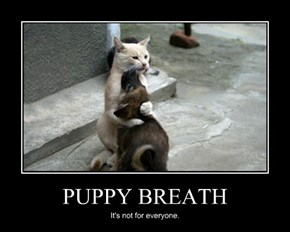 PUPPY BREATH