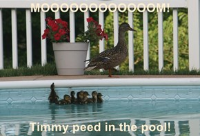 MOOOOOOOOOOOOM!  Timmy peed in the pool!