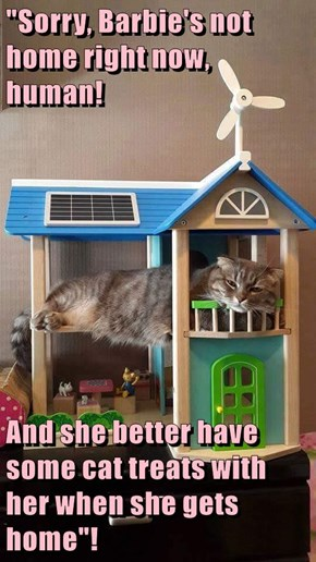 """Sorry, Barbie's not home right now, human!  And she better have some cat treats with her when she gets home""!"