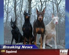 Breaking News - Squirrel