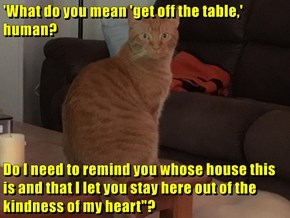 """'What do you mean 'get off the table,' human?  Do I need to remind you whose house this is and that I let you stay here out of the kindness of my heart""""?"""