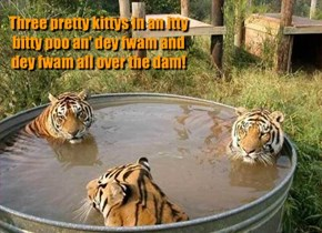 Three pretty kittys in an itty bitty poo an' dey fwam and dey fwam all over the dam!