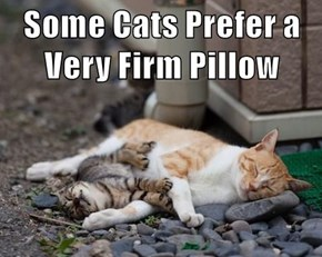 Some Cats Prefer a Very Firm Pillow