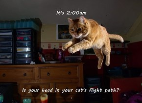 It's 2:00am  Is your head in your cat's flight path?.                                                                                   .
