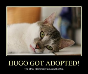 HUGO GOT ADOPTED!