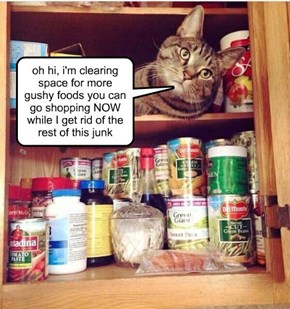kittehs: so helpful around the home