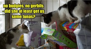 no budgies, no gerbils - did she at least get us some tunas?