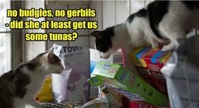 no budgies, no gerbils - did she at least get us some tunas?