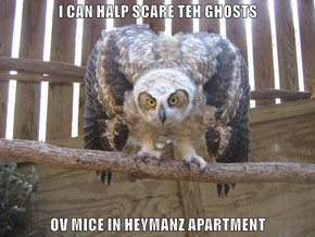 I CAN HALP SCARE TEH GHOSTS  OV MICE IN HEYMANZ APARTMENT