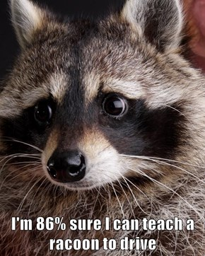 I'm 86% sure I can teach a racoon to drive