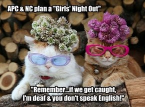 "APC & NC plan a ""Girls' Night Out"""