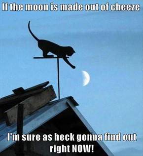 If the moon is made out of cheeze  I'm sure as heck gonna find out right NOW!