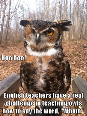 """Hoo hoo! English teachers have a real challenge in teaching owls how to say the word, """"Whom""""."""