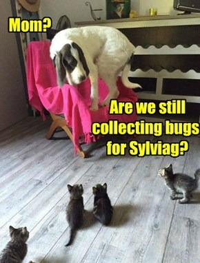 Mom?                                      Are we still                             collecting bugs                                  for Sylviag?