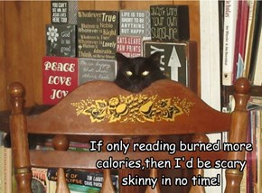 If only reading burned more calories,then I'd be scary skinny in no time!