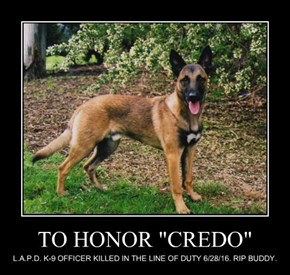 "TO HONOR ""CREDO"""