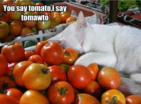 You say tomato,i say tomawto