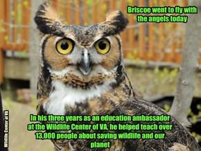 Briscoe's Story:  http://wildlifecenter.org/news_events/news/briscoe-2010-2016