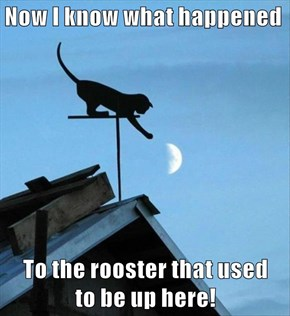 Now I know what happened  To the rooster that used                                                             to be up here!