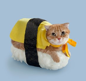 Neko-Sushi Is an Art Form That Involves Placing Dressed up Cats on Top of Rice