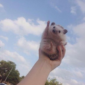 Someone Staged a Photoshop Battle for an Adorable Cheering Hedgehog and It's Glorious
