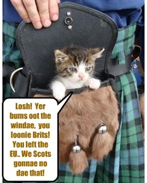 Scottish kittie speaks his mind!