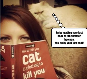 What has priority over your summer reading?    Keeping your kitteh happy!