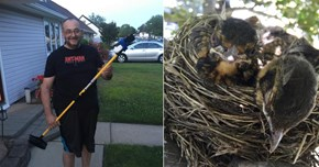 Dad Assembles Ghetto Selfie Stick to Take Pictures of Birds in a Tree