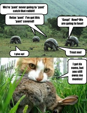 The Tortoise and the Hare....And the Equalizer