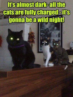 It's almost dark- all the cats are fully charged - it's gonna be a wild night!