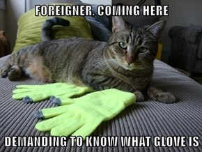 FOREIGNER, COMING HERE  DEMANDING TO KNOW WHAT GLOVE IS